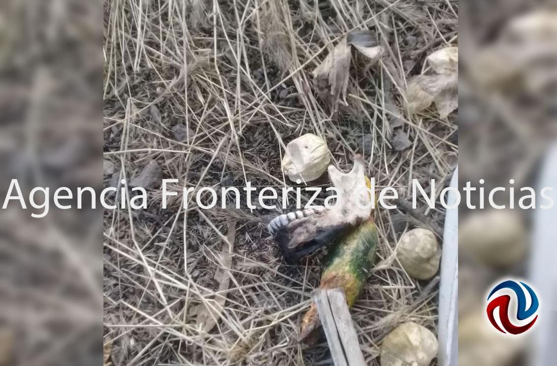 Encuentran más restos humanos en Las Delicias