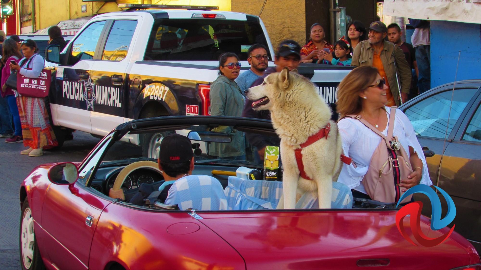 AMLO, los gritones y el perro Paco