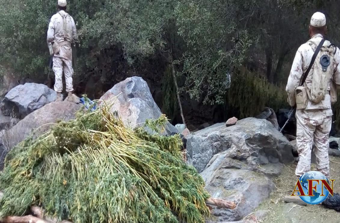 Destruye Ejército plantíos y secadero de marihuana