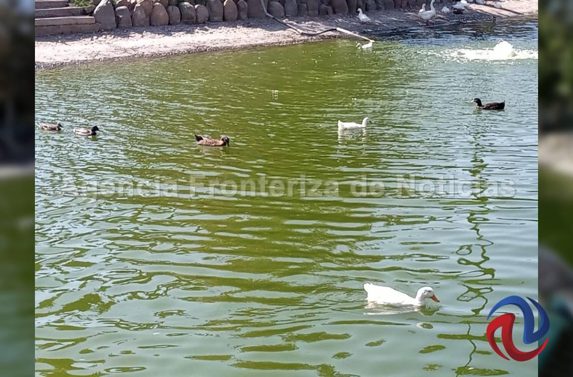 Lago, lanchitas, tirolesas y fauna para disfrutar en el Parque Morelos
